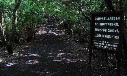 CONOCE AOKIGAHARA: EL BOSQUE PERFECTO PARA MORIR