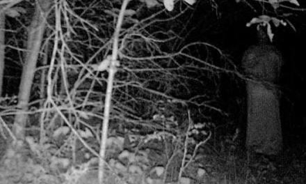 Hoia Baciu, el bosque infernal en Transilvania
