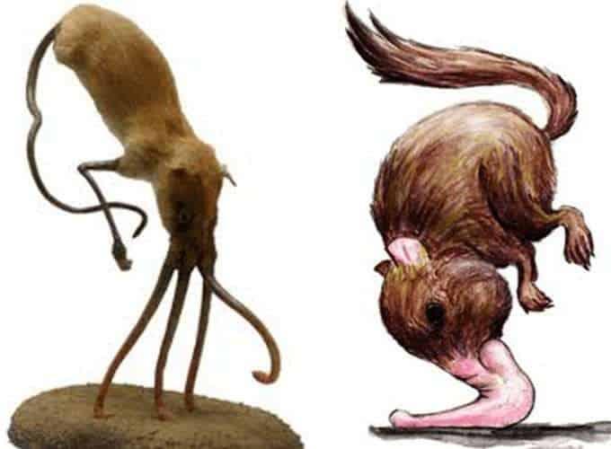 Narigudos: los roedores que caminan con su nariz